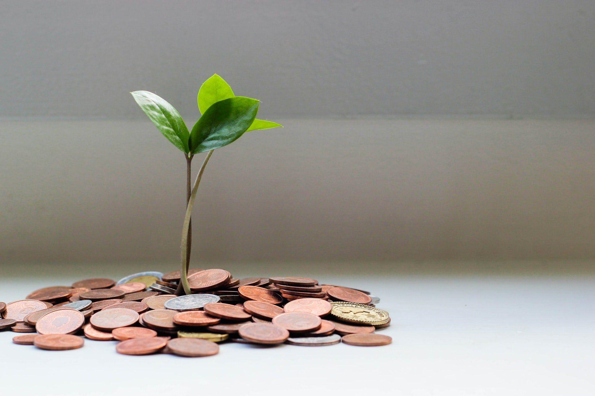 malutki kwiat który wyrasta z pieniędzy